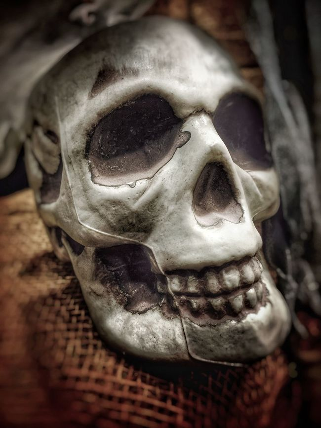 Bones Boney Dead Death Death Face Halloween HEAD Human Skull Scary Scary Face Scary Faces Skeleton Skeletons Skull Skulls Spooky The Magic Mission