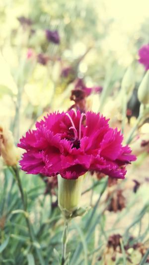Dark Pink Dark Pink Flower 🌹🌹🌹🌹🌹(^_-) ⚘🌼🌷🍀🌿🌹💐🌸 🌹 🌹🌷 🌷 💐 💐 🌸Nature🌸 🌸 Nature Flower 🌸~ 🌸flower🌸 🌸 Good 🌷 Flowers 🌹 Beautiful Flowers 🌸 Beautiful Beautiful Nature Nature Photography Nature Collection ❤❤ 🌸 Flowers In My Garden 🌸🌿 Nature 🌸🌸🌷 ❤️❤️😍😍 🌼❤❤👍👌💋 ⚘ ⚘🌷 ⚘⚘