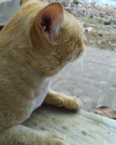 Cat Catsofinstagram 🐈 Lookingforsomething 💤 Clickwhatilike Postwhatilike Instafit Picofmyday 😀