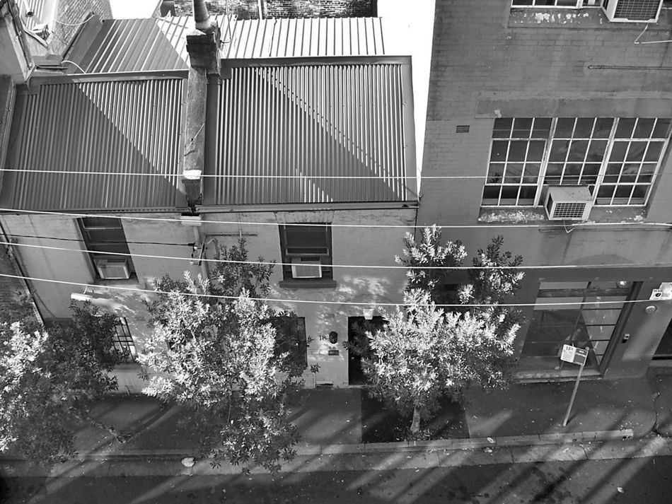 Architecture Black And White Photography Building Exterior Built Structure City Day Looking Down Monochrome Photography Nature No People Outdoors Street Streetphotography Sydney Photography Tree Trees Break The Mold EyeEmNewHere Art Is Everywhere