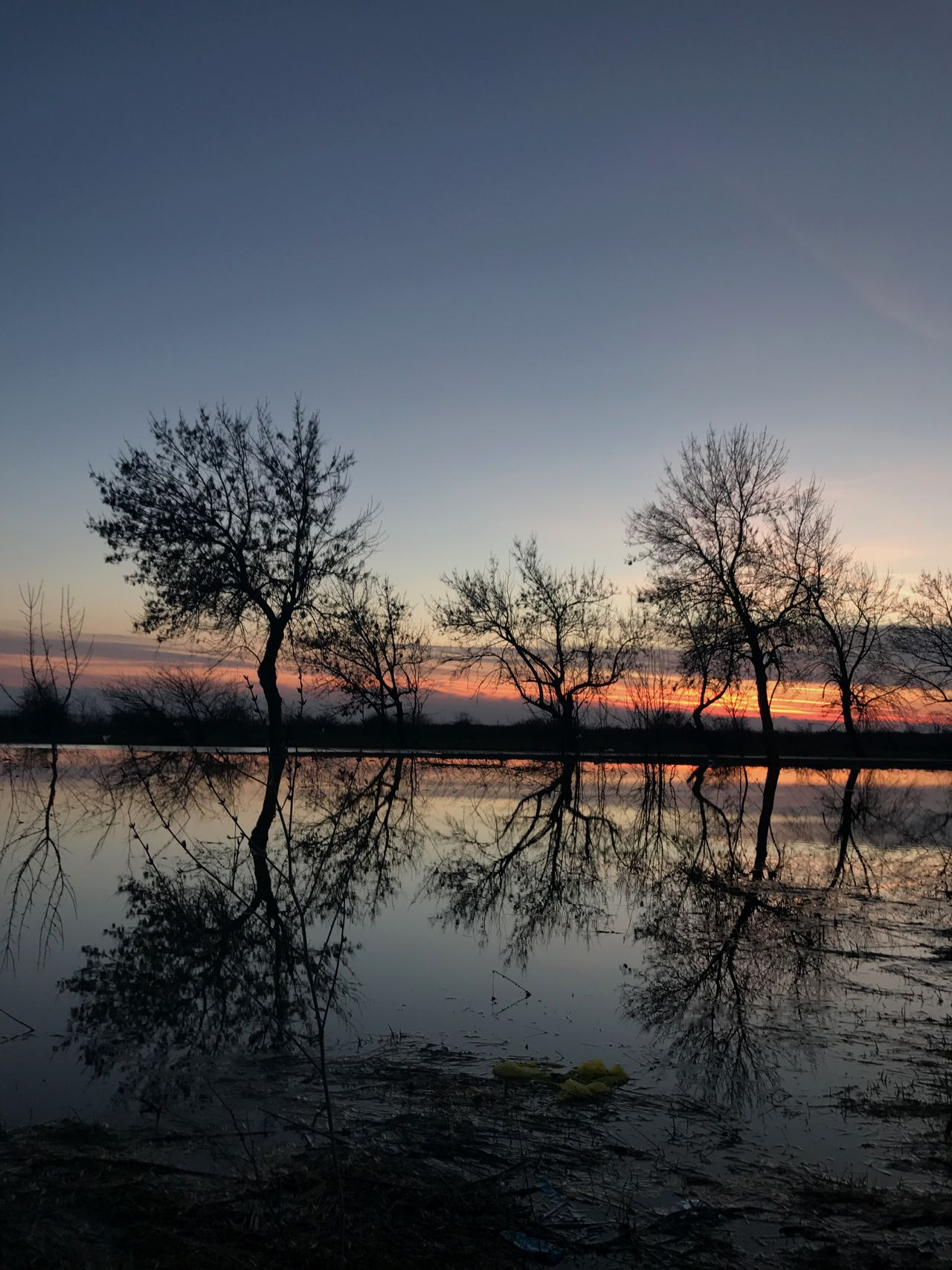 Water Reflection Nature Tree Sky Tranquility Beauty In Nature Outdoors Sunset Amazing View Bulgaria