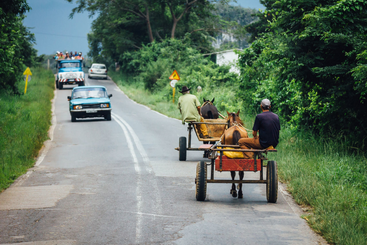Carriage Carriage And Horses Cuba Collection Cuban Cars Cuban Life Horse Mode Of Transport Outdoors Real People Riding Road Rural Rural Scene Sitting Transportation