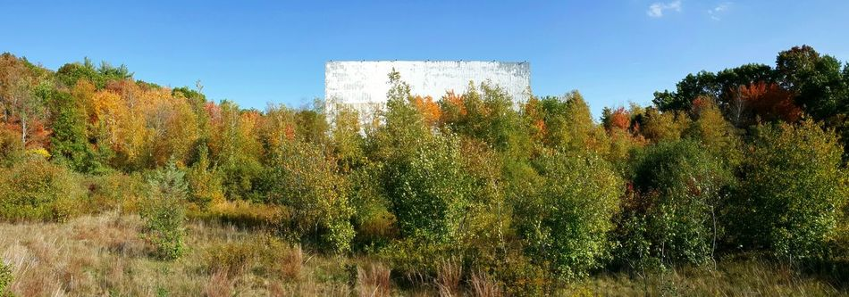 Feature presentation. Autumn Colors Trees Abandoned Places Drive-in Theater Blue Sky Clear Sky Day Plant Outdoors Panoramic Nature Beauty In Nature Growth Fall Beauty No People Horizontal EyeEm EyeEm Gallery EyeEm Best Shots - Nature S6
