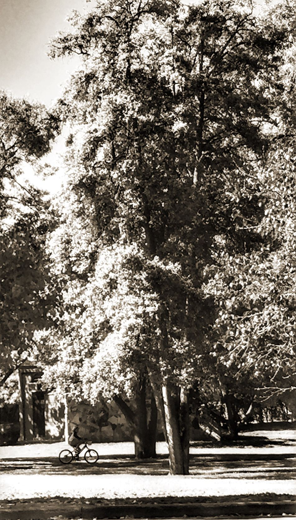 Check This Out Hanging Out Taking Photos People Watching Kids Having Fun Cycling in the Park BW Collection EyeEm Best Shots - Black + White Showcase April BW_photography Parks Tree Great Outdoors Nature Nature On Your Doorstep