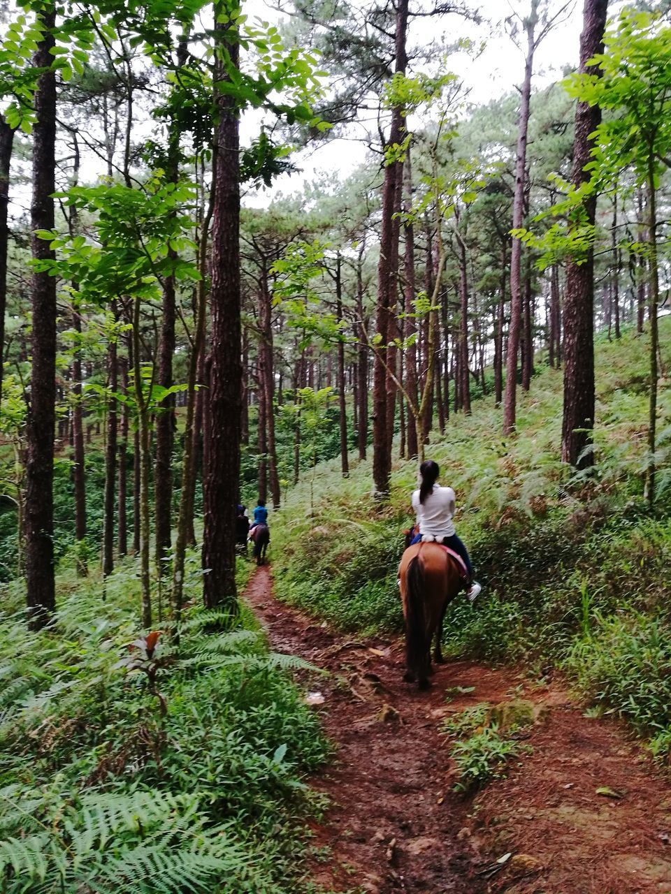 tree, forest, real people, nature, horse, leisure activity, growth, lifestyles, beauty in nature, scenics, day, adventure, men, outdoors, woodland, rear view, mammal, riding, two people, horseback riding, domestic animals, tree trunk, healthy lifestyle, togetherness, mountain bike, sky, people