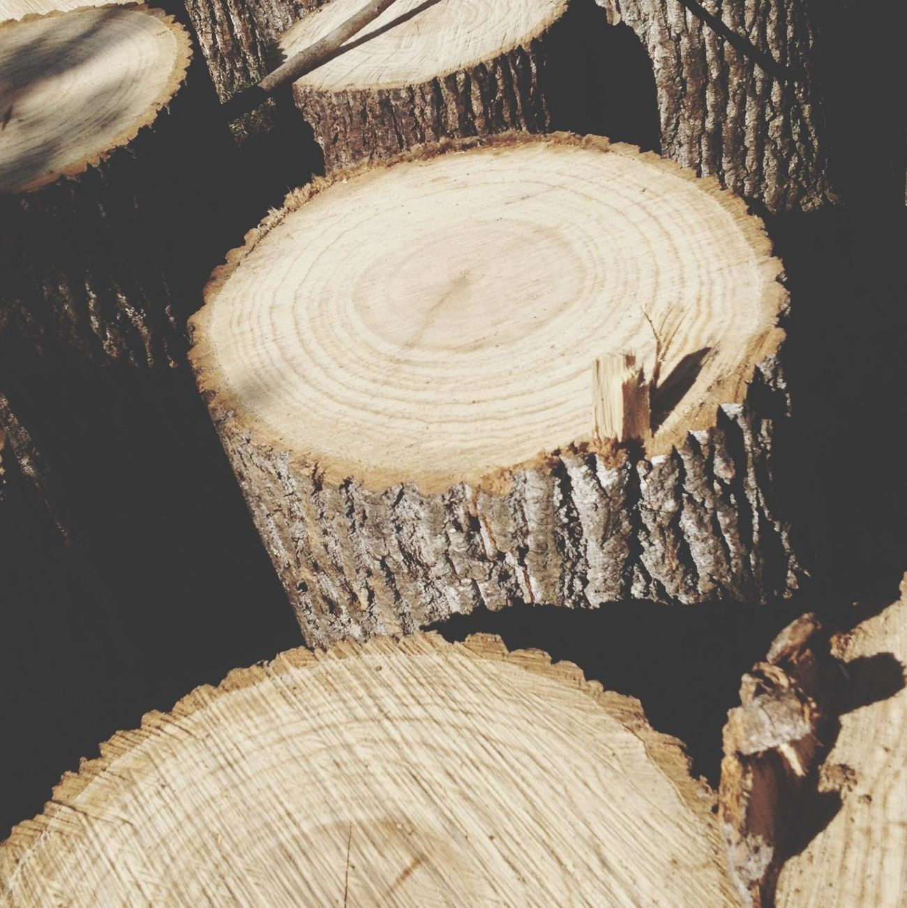 Wood Tree Trunk Firewood Fall Time