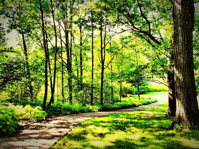 Prospect Park NYC Trees Path In Nature