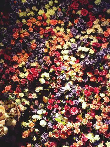 Taking Photos Enjoying Life Flowers