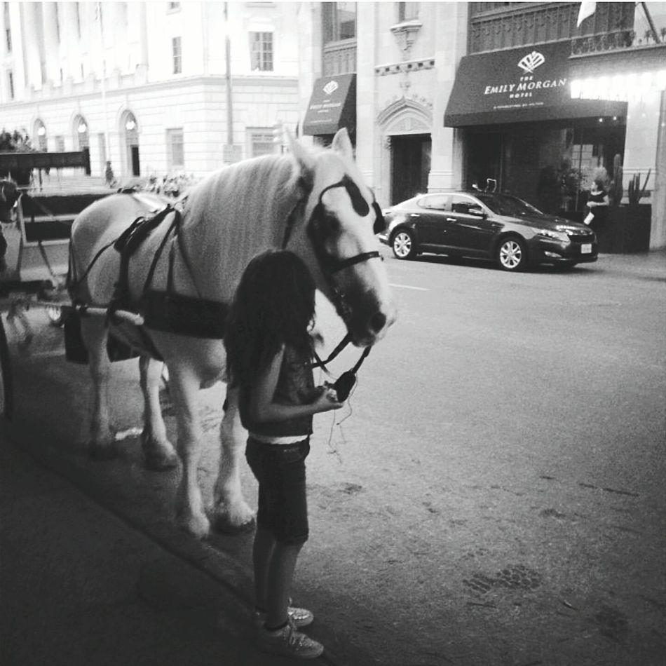 Capture The Moment Sanantonio Texas Summer Views Beautifulhorse Horse Carriage