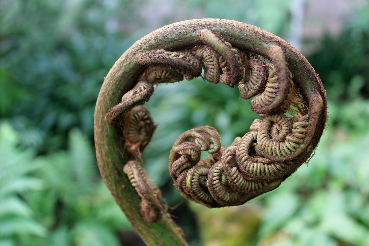 Beauty In Nature Close-up Curled Up Day Flexibility Focus On Foreground Green Greenery Growth Intertwined Nature No People Outdoors Plant Spiral Tendril
