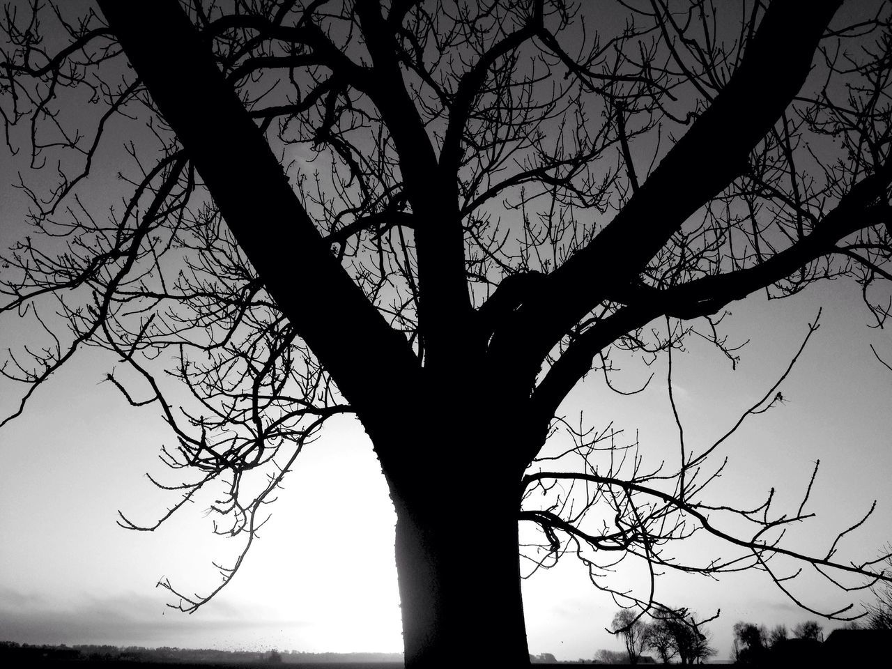 Trees Sunset Silhouettes Blackandwhite Hugging A Tree Silhouette