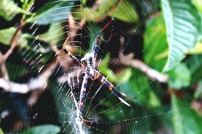 Walking Around Animal Portrait Animal Spider Nature On Your Doorstep