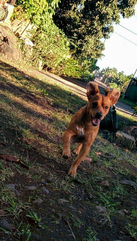 Summer Dogs Happy Dog Teckel Goodvibes Dog Love Beautiful Dog Dog Playing Dog Run Cute Dog 🐕💝