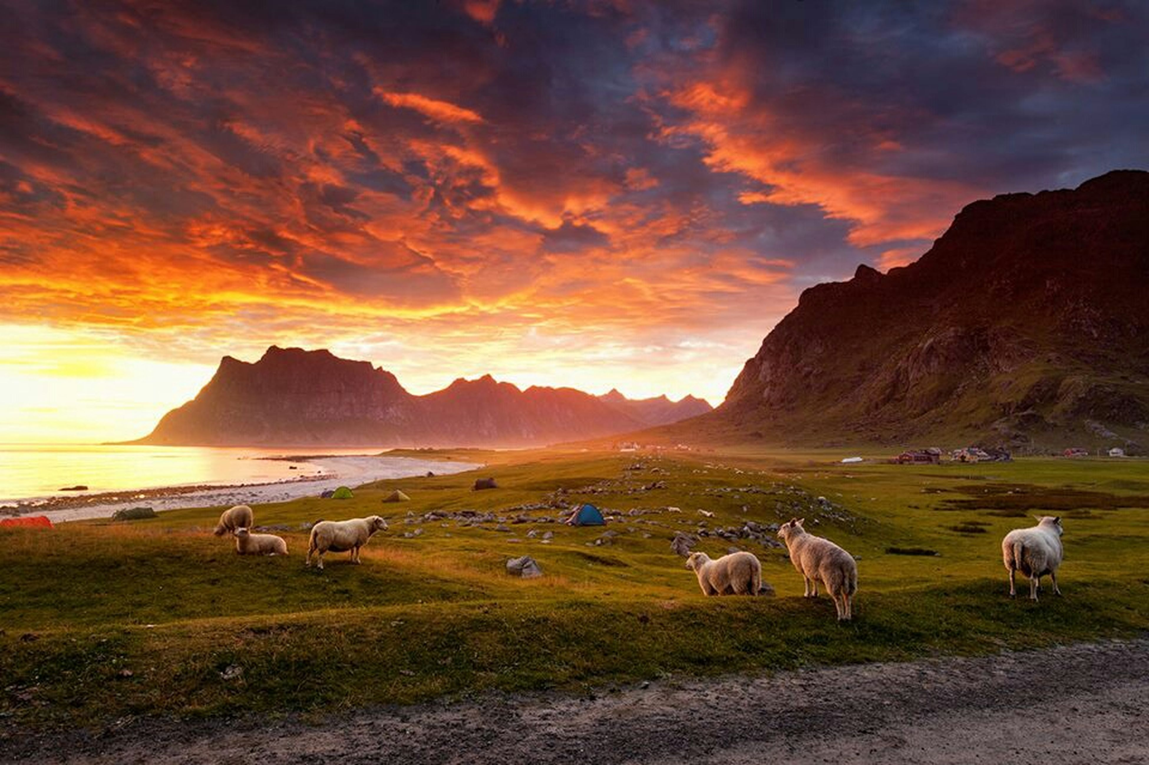 animal themes, sky, domestic animals, livestock, cloud - sky, mammal, landscape, scenics, tranquil scene, mountain, grass, sunset, nature, tranquility, beauty in nature, sheep, field, cloud, grazing, water