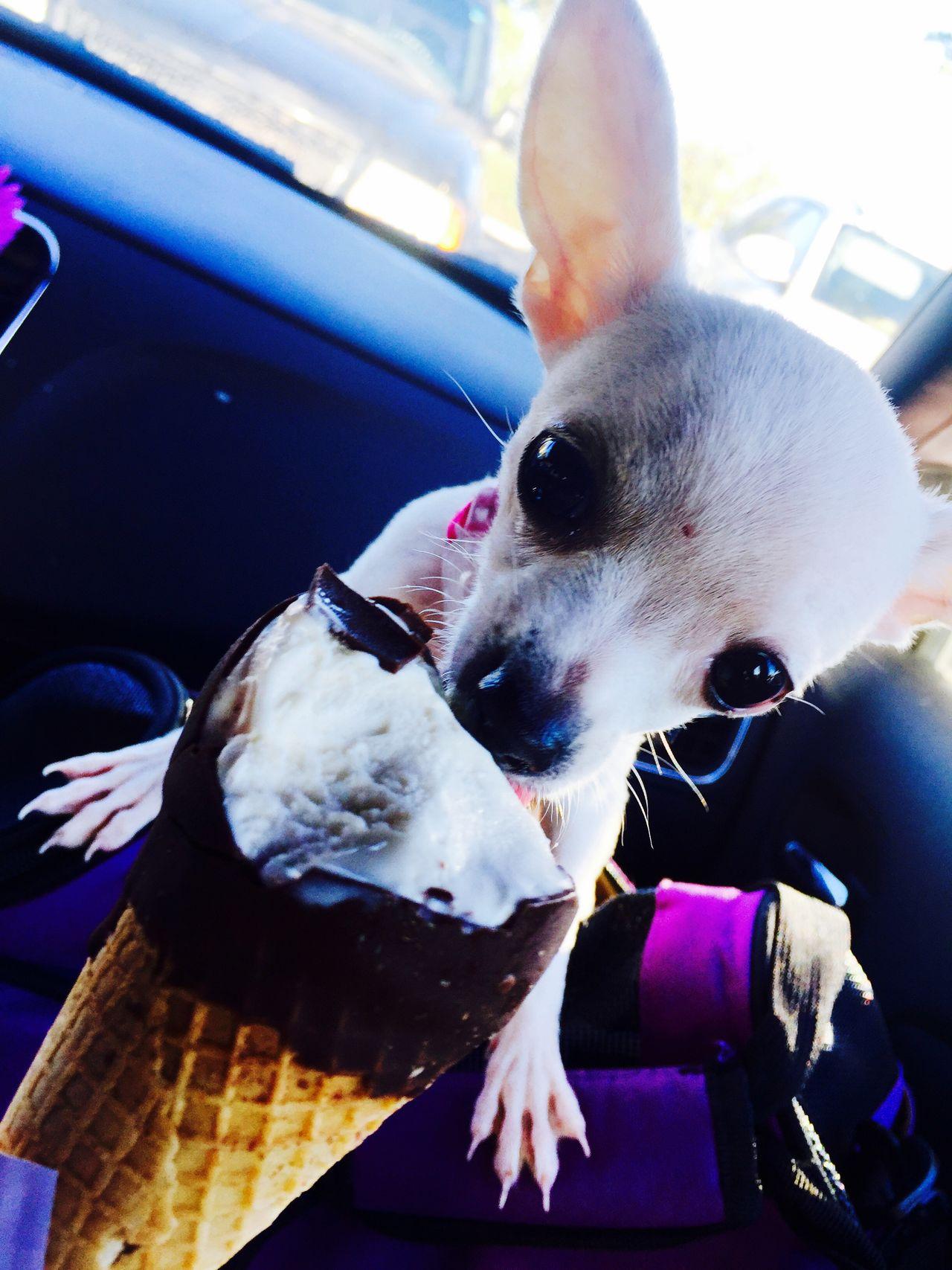 Puppy's first ice cream
