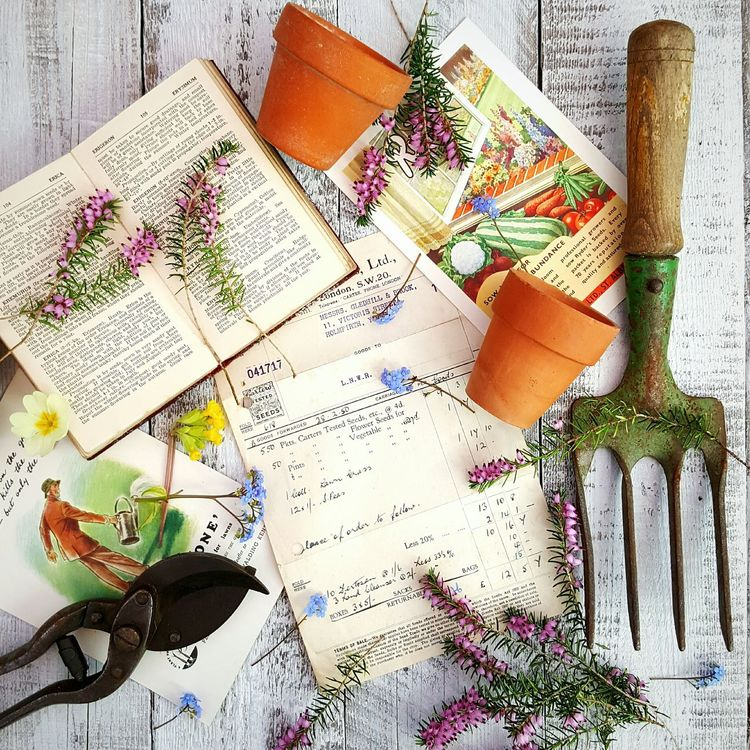 Vintage gardening No People Multi Colored Indoors  Close-up Day Garden Photography Close Up Photography Springtime Vintage Garden Tools 1950's Erica Brunnera Primulas Terracotta Still Life
