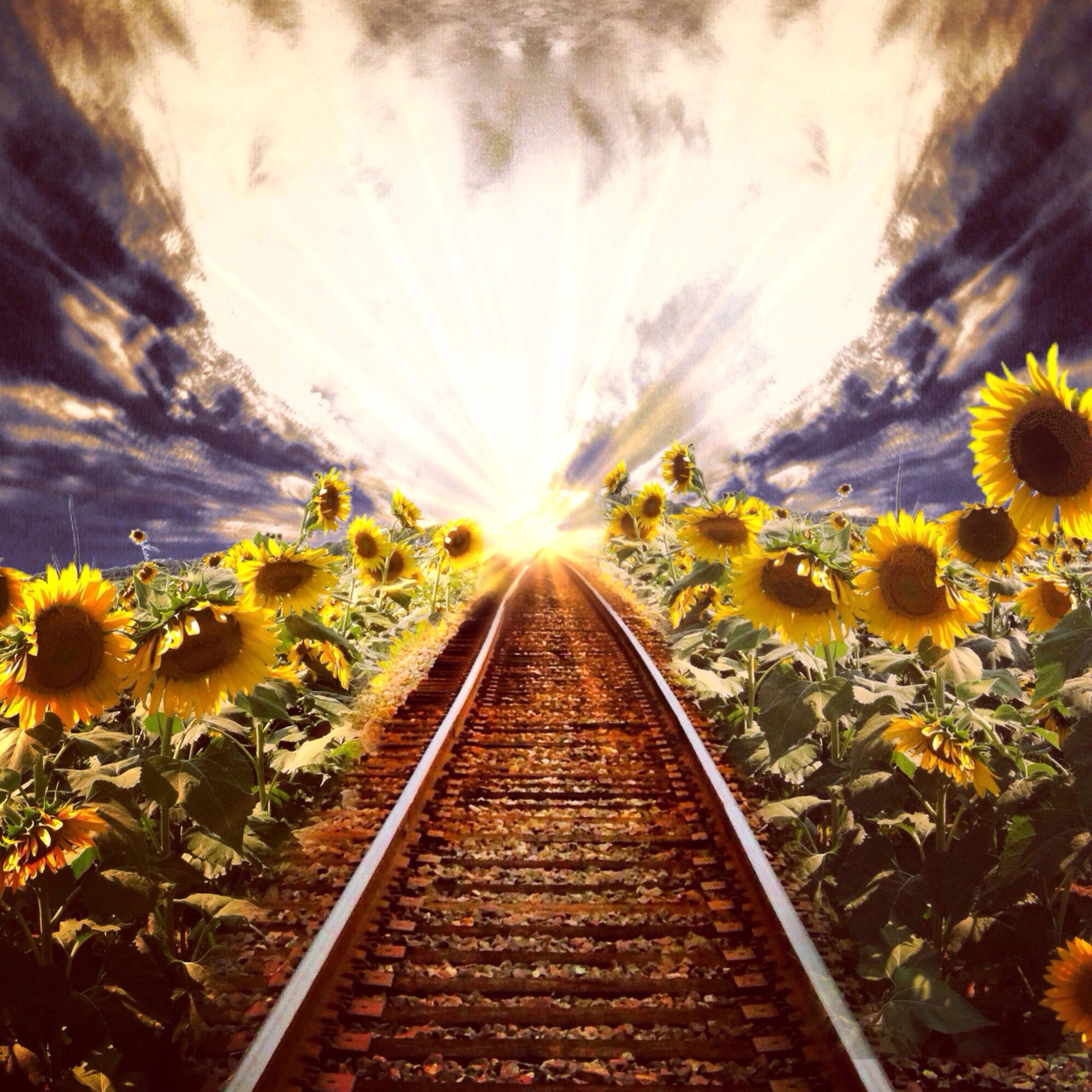 the way forward, yellow, diminishing perspective, flower, vanishing point, sky, nature, growth, beauty in nature, tree, cloud - sky, transportation, sunlight, sunset, tranquility, plant, no people, outdoors, railroad track, tranquil scene