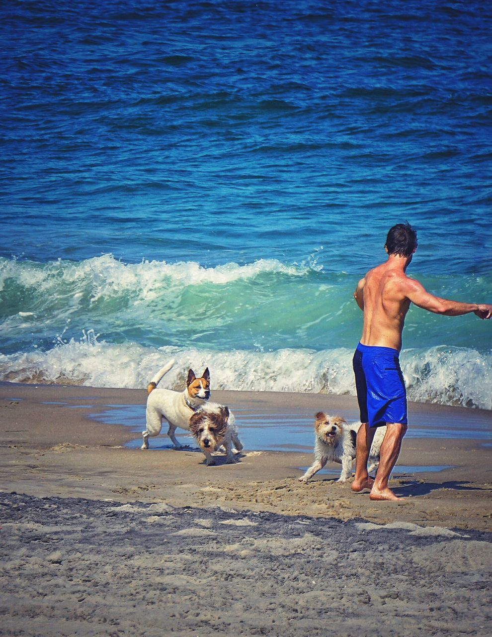 Man And Dogs Standing On Beach Against Sea