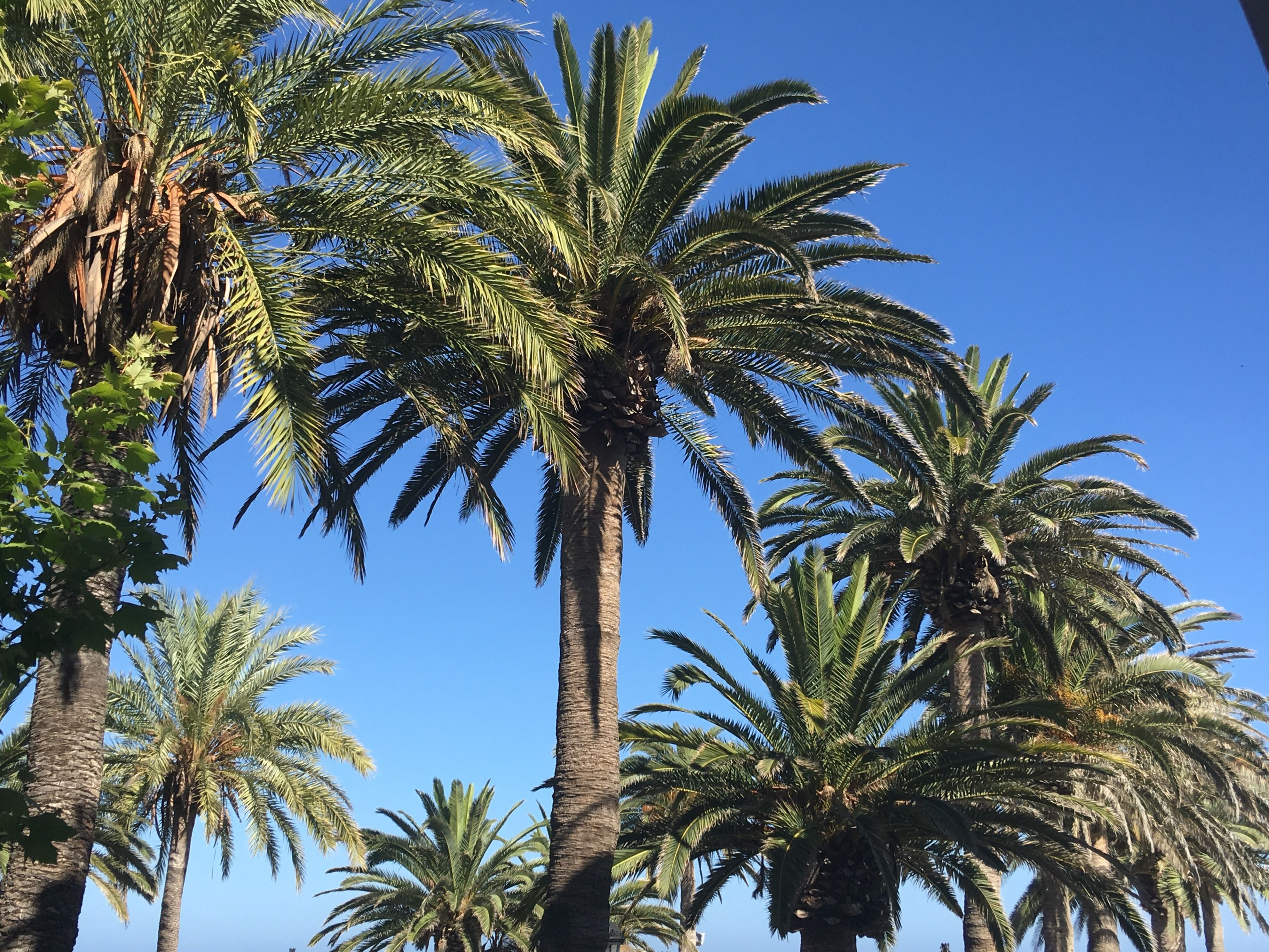 More Palm Trees Palm Trees Blue Blue Sky Beautiful Beauty In Nature