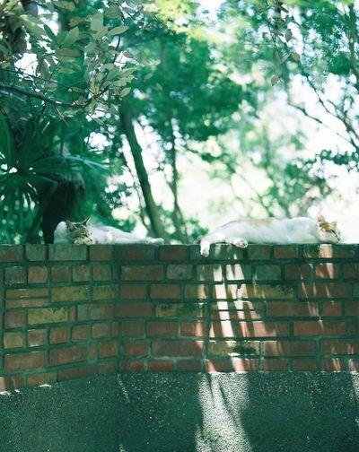 Film Japan Film Camera Photography Mamiya RB67 120mm Cat