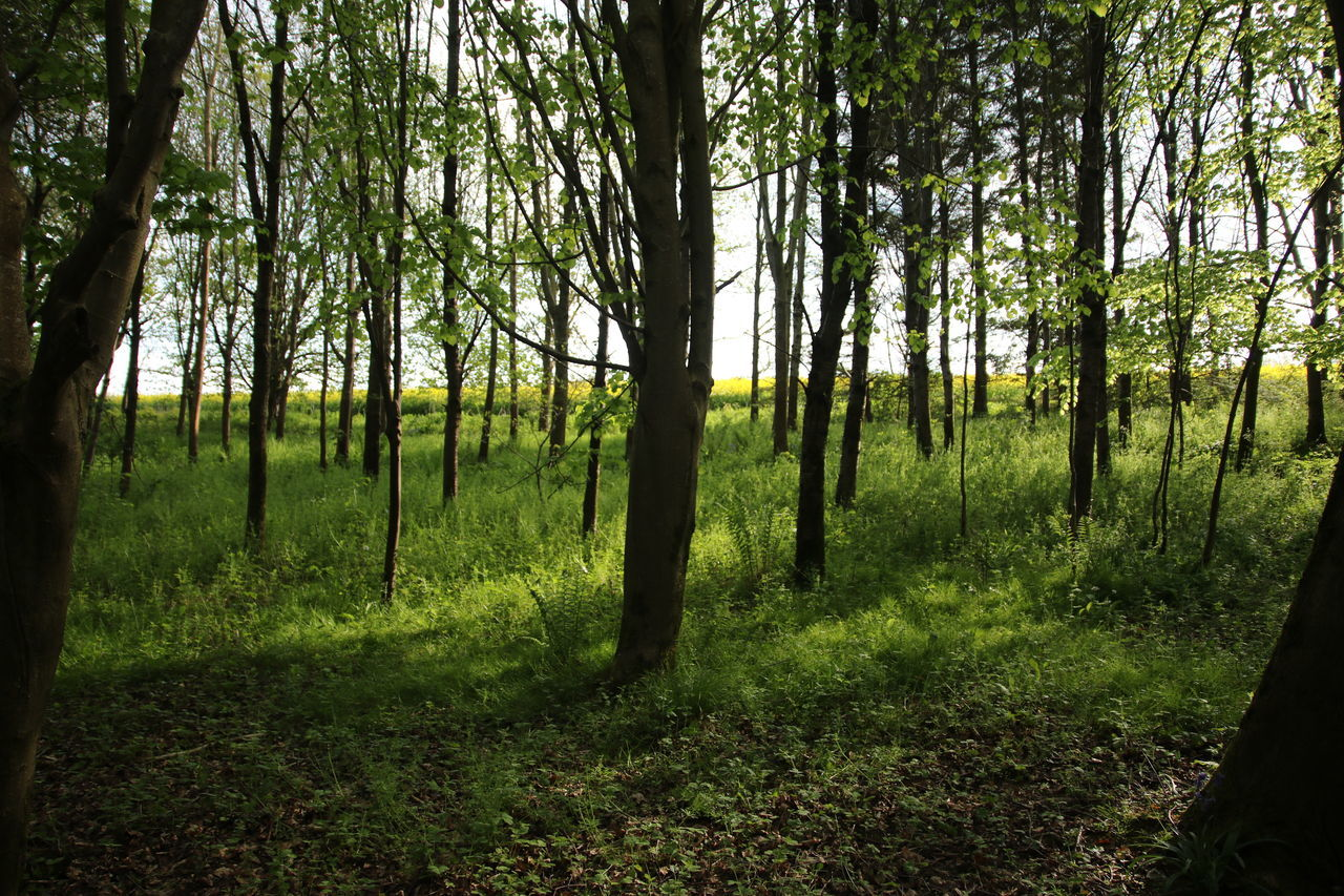 Beauty In Nature Countryside Day Dorset Forest Grass Growth Landscape Nature No People Outdoors Scenics Shadows Sky Sun Through Trees Tranquil Scene Tranquility Tree Tree Trunk WoodLand