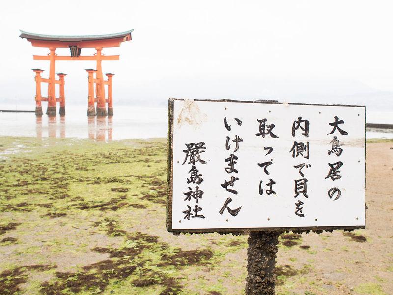 japanese dreams The Traveler - 2015 EyeEm Awards Japan Miyajima Hiroshima Red Ultimate Japan