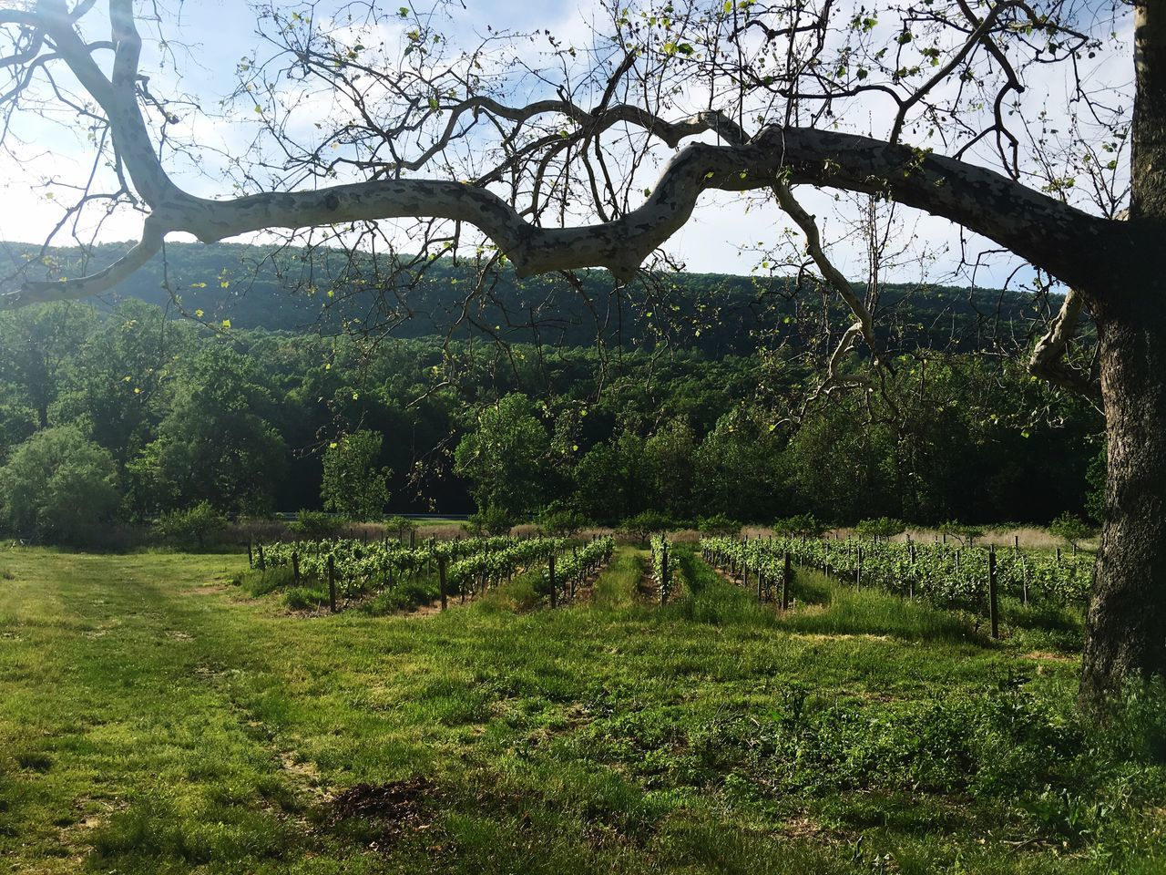 A beautiful day in a fun vineyard