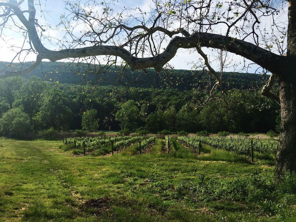 A beautiful day in a fun vineyard