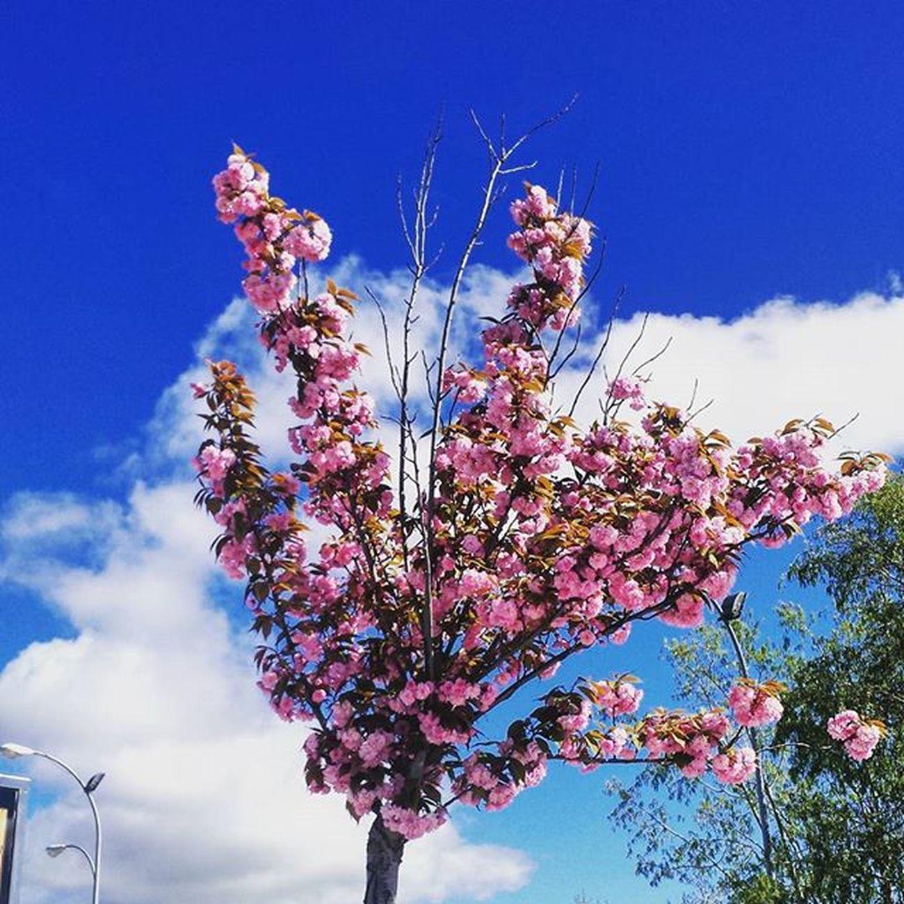Photography Photo Pamplona Movilgrafias Flores Flowers Pink Primavera Spring Igerspamplona Igersnavarra Naturaleza_navarra Navarragrafias Estaes_navarra Descubriendoigers Anonymous_nature Anonymous_igers Anonymous_es Anonymous_igers_members
