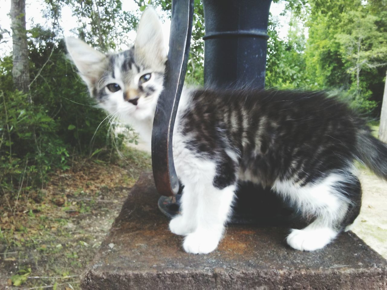 Domestic Cat One Animal Pets Domestic Animals Whisker Outdoors Feline No People Animal Themes Mammal Day Water Nature
