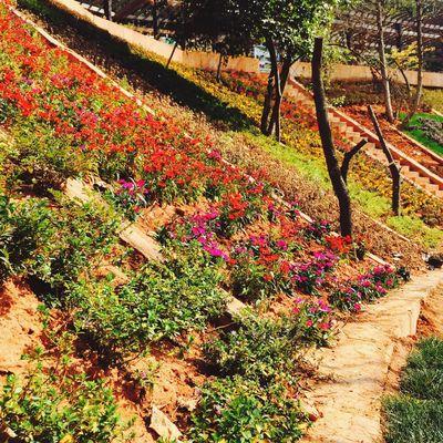 Flower Sunny Delight  Nature