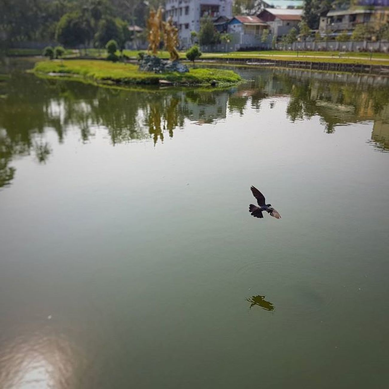 Thiri Nandar Lake Igersmyanmar Myanmar Burma Yourworldgallery Instagood Instagram Travelgood Choose2create Vacationinstyle Yangon Rangoon Water Lake AOV Artofvisuals Instagrammers Pigeon