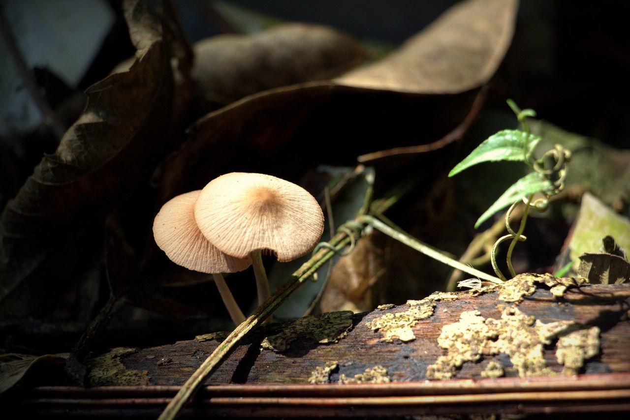 Close-up Day Maximum Closeness Mushrooms Magic. Nature No People Outdoors Wild Nature Magic