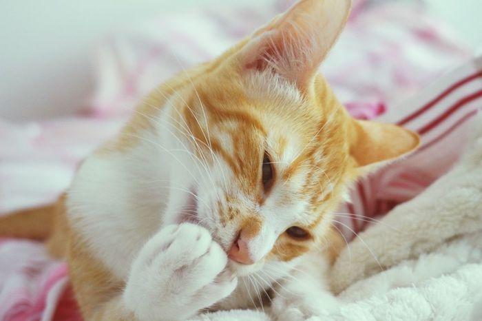 Instamoments Domestic Cat Feline Day Cat Lovers Yellowcat Ootd