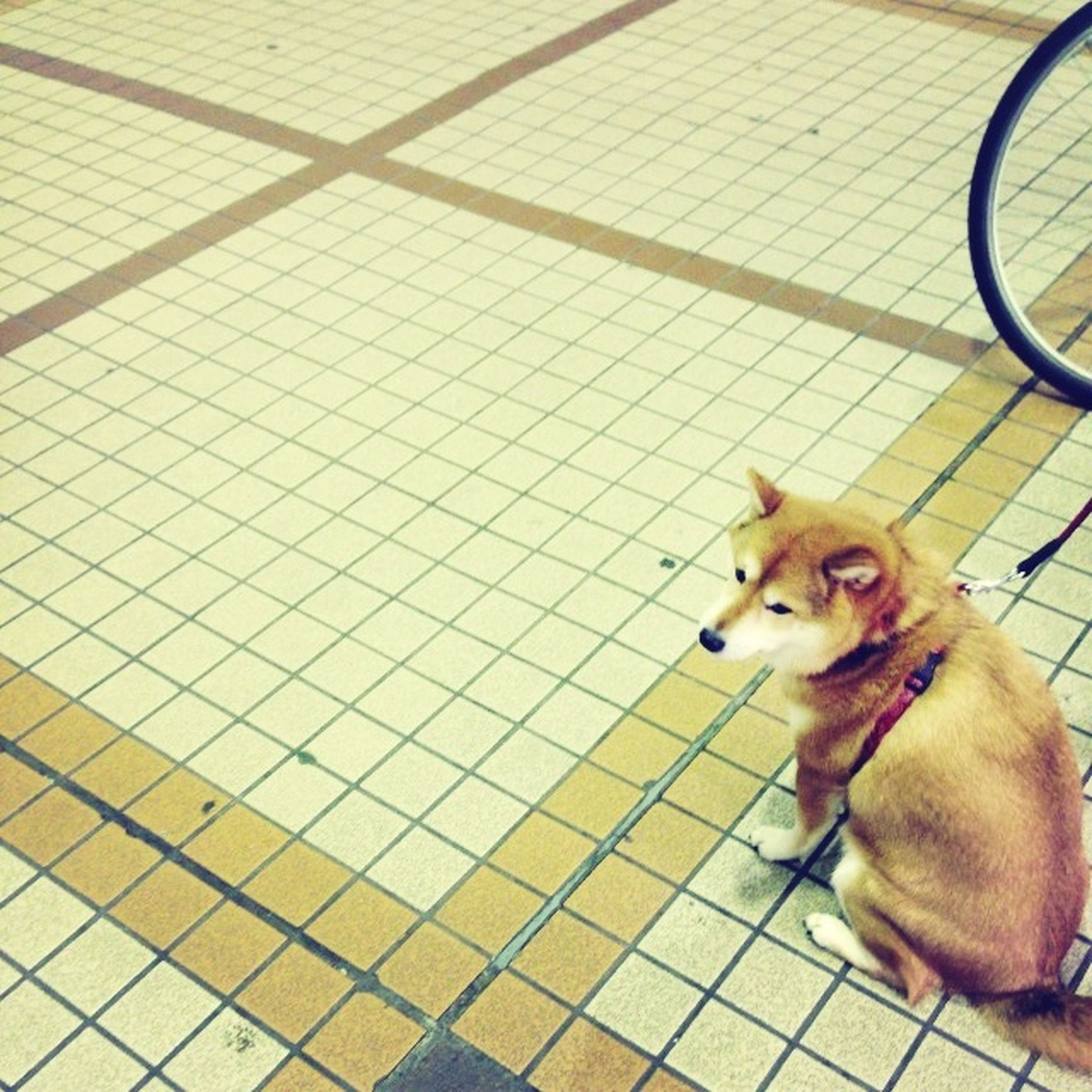 pets, domestic animals, animal themes, dog, mammal, one animal, indoors, high angle view, flooring, sitting, no people, tiled floor, portrait, relaxation, cage, day, metal, looking at camera, metal grate, cute