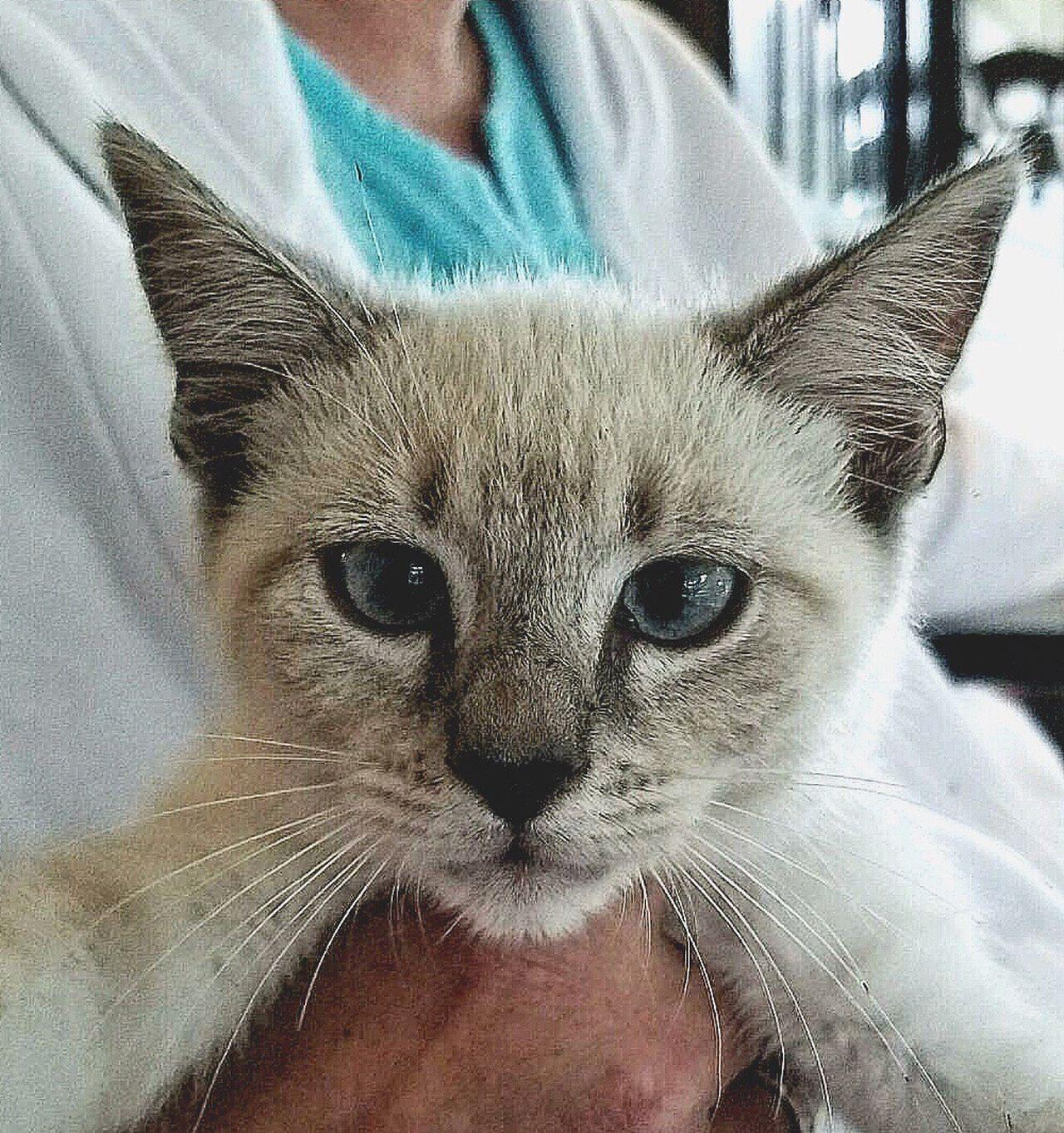 Cross Eyed Kitten