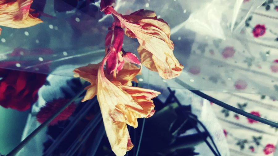 EyeEm Selects Hanging Leaf Flower No People Red Autumn Fragility Close-up Nature Day Outdoors Freshness Dry Flowers Flowercomposition Colorful T-shirting