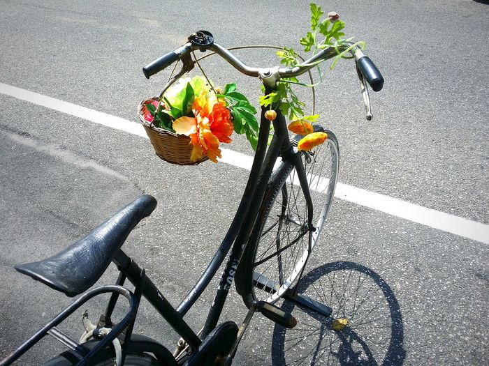 Bicicletta decorata in una vietta di Vibo Valentia Bicycle Road Flower Rose - Flower Plant Mode Of Transport Outdoors Parked Petal Transportation Vibo Valentia Fioritura Fiori Ruota Estate Transportation Bicycle Land Vehicle Mode Of Transport Shadow Road Stem Leaf Flower Connected By Travel