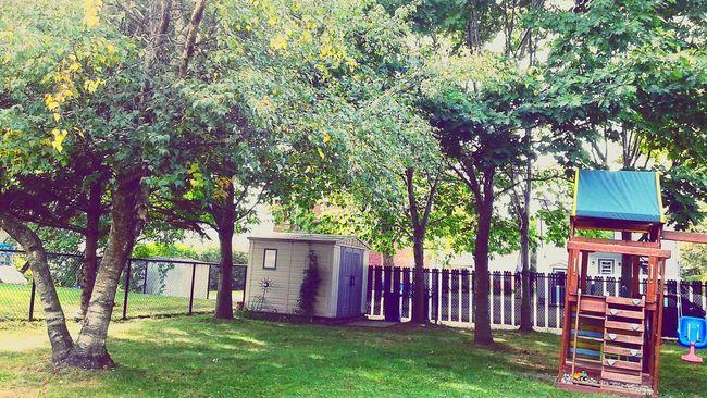 Backyard Macour Nature Tree