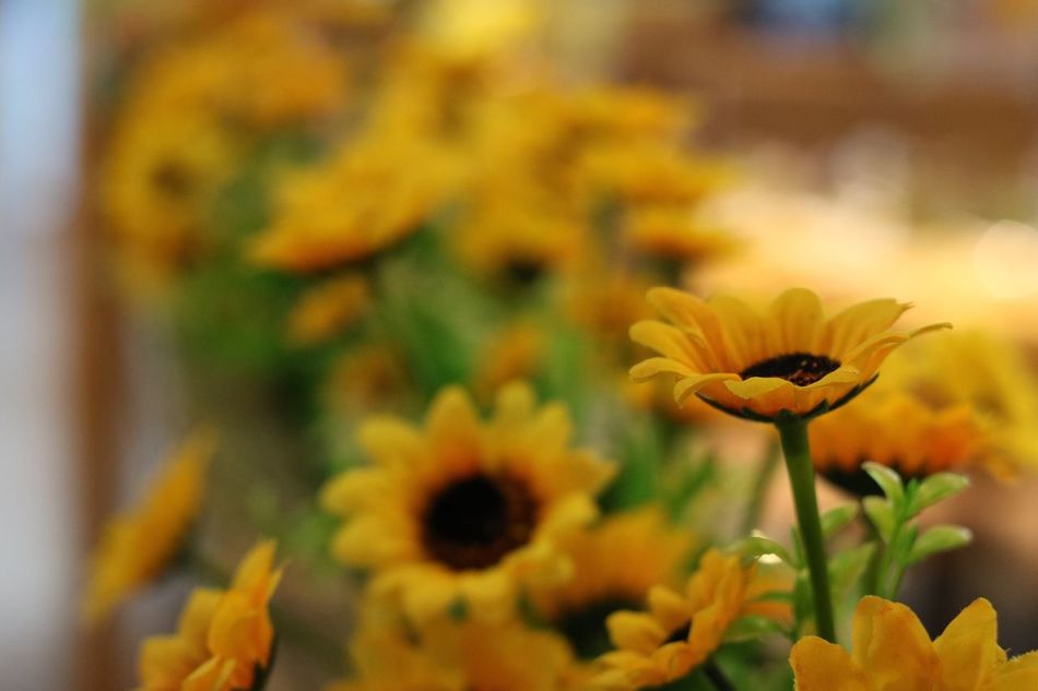 Flower Love Earth Lovely Love Love ♥ Flowers Flower Flowers, Nature And Beauty Yellow Flower Ornamental Plants Blur Blurred Motion Blurred Background