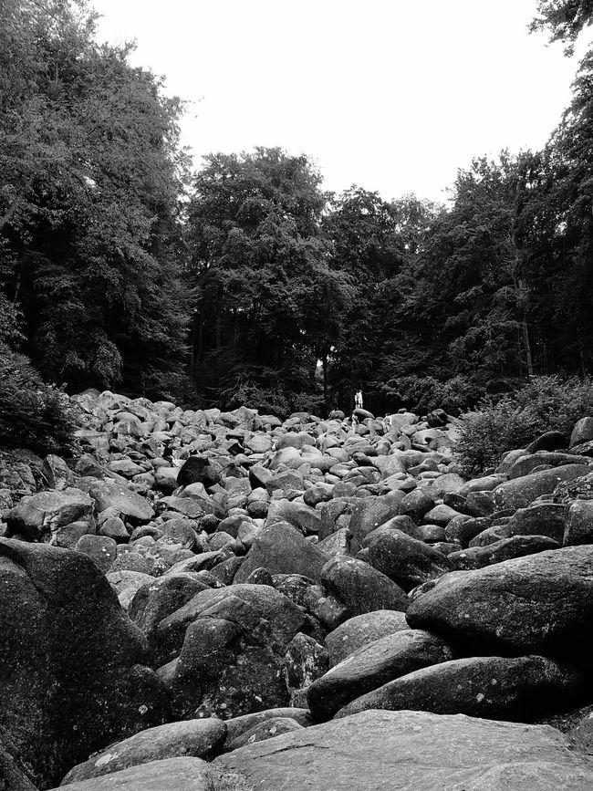 Black And White Eye4photography  Blackandwhite Nature Eye4black&white  Taking Photos Germany