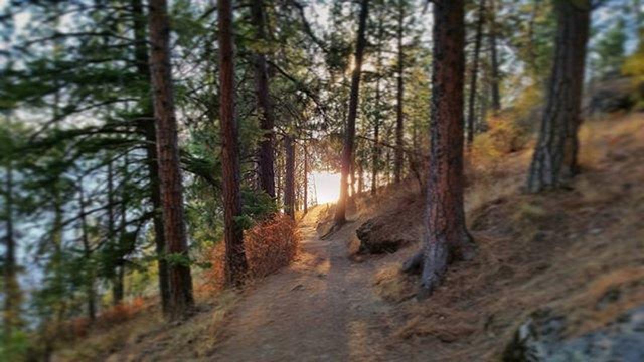 Evening Hike on TubbsHill Goldenhour Enjoythelittlethings Northwest Upperleftusa GetOutAndLive