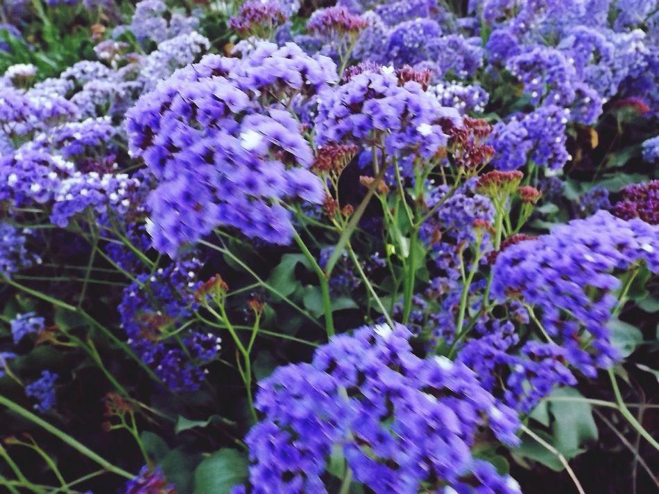 Purple Flowers Flower Stalker Flowerstalking