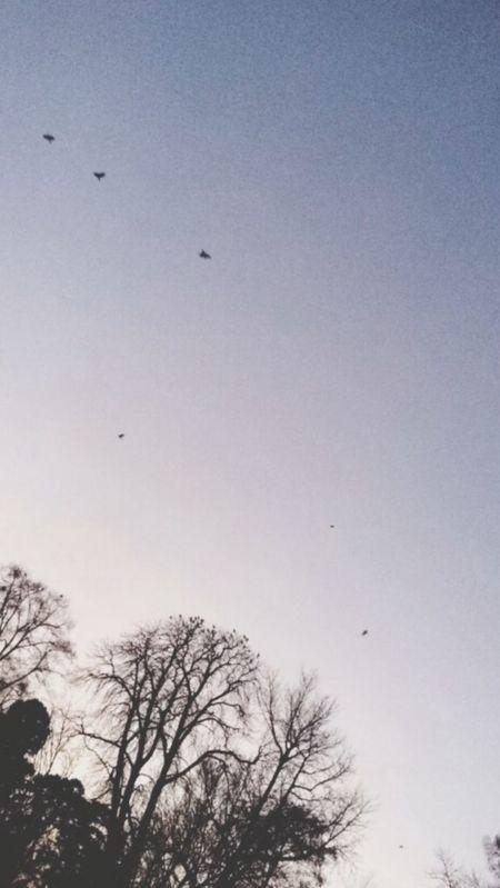 Paysage Winter Beautiful Sky Hirondelles Dream Fond D'ecran Hometown