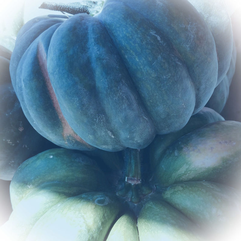 GREEN MUR HARVEST Halloween Colors Of Autumn Pumpkins Eyeemphoto The Song Of Color Fall Beauty Still Life Fine Art The Song Of Light StillLifePhotography Beauty In Nature Softness Close-up Nature The Art Of Photography Tranquility Freshness Vegetable MUR WHITE