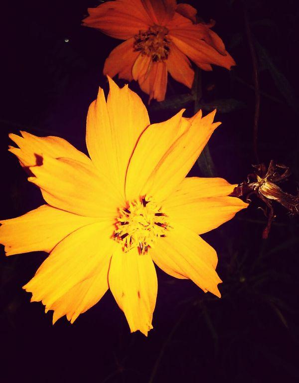The Streets Of Elmhurst Flora Of Elmhurst, NY Flowers At Night Nature