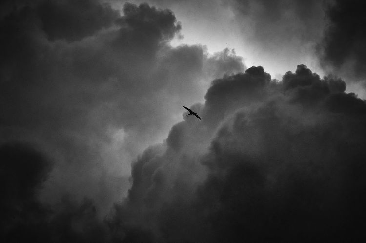 Searching for light.. Storck Bird Sky And Clouds Alsatian Scenery Skyporn Greysky Bnw Monochromatic EyeEm Gallery From My Point Of View Nikon Light And Shadow Perspective Strasbourg Alsace Monochrome Photography Flight Blackandwhite Photography Black And White Monochrome Bird Photography Nature Showcase June Dramatic Angles Flying High