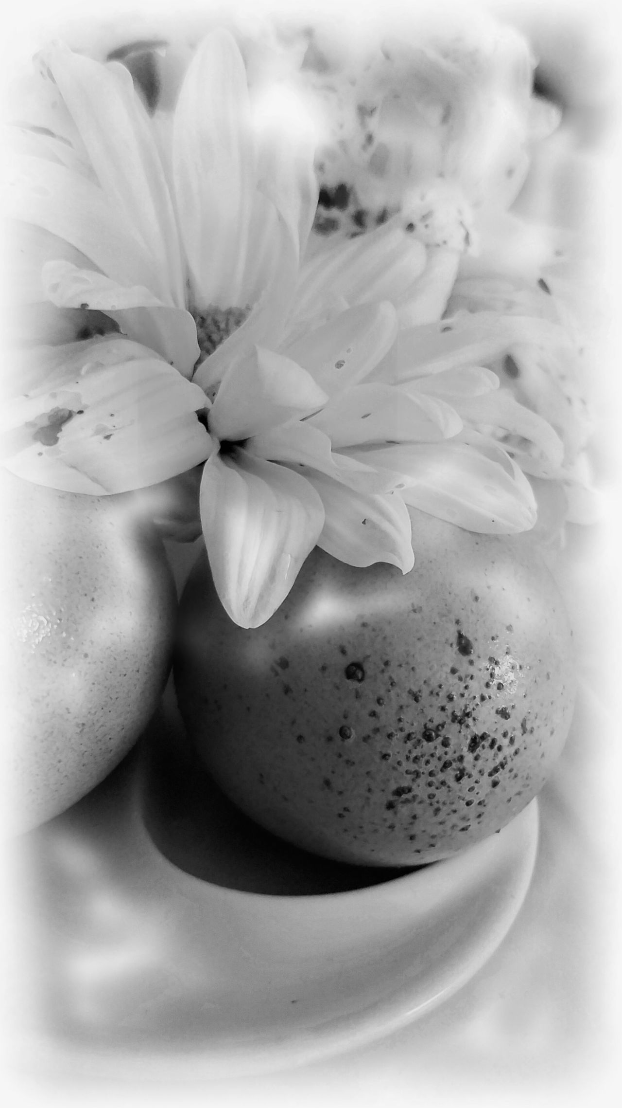 B&W Easter B&w Beauty In Nature Close-up Day East Easter Ready Enjoying Life Flower Flower Head Fragility Freshness Growth Indoors  MUR B&W Nature No People Spring
