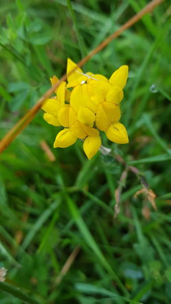 Flower Yellow Plant Nature Leaf Beauty In Nature Growth Fragility Outdoors Petal Close-up Green Color No People Flower Head Day