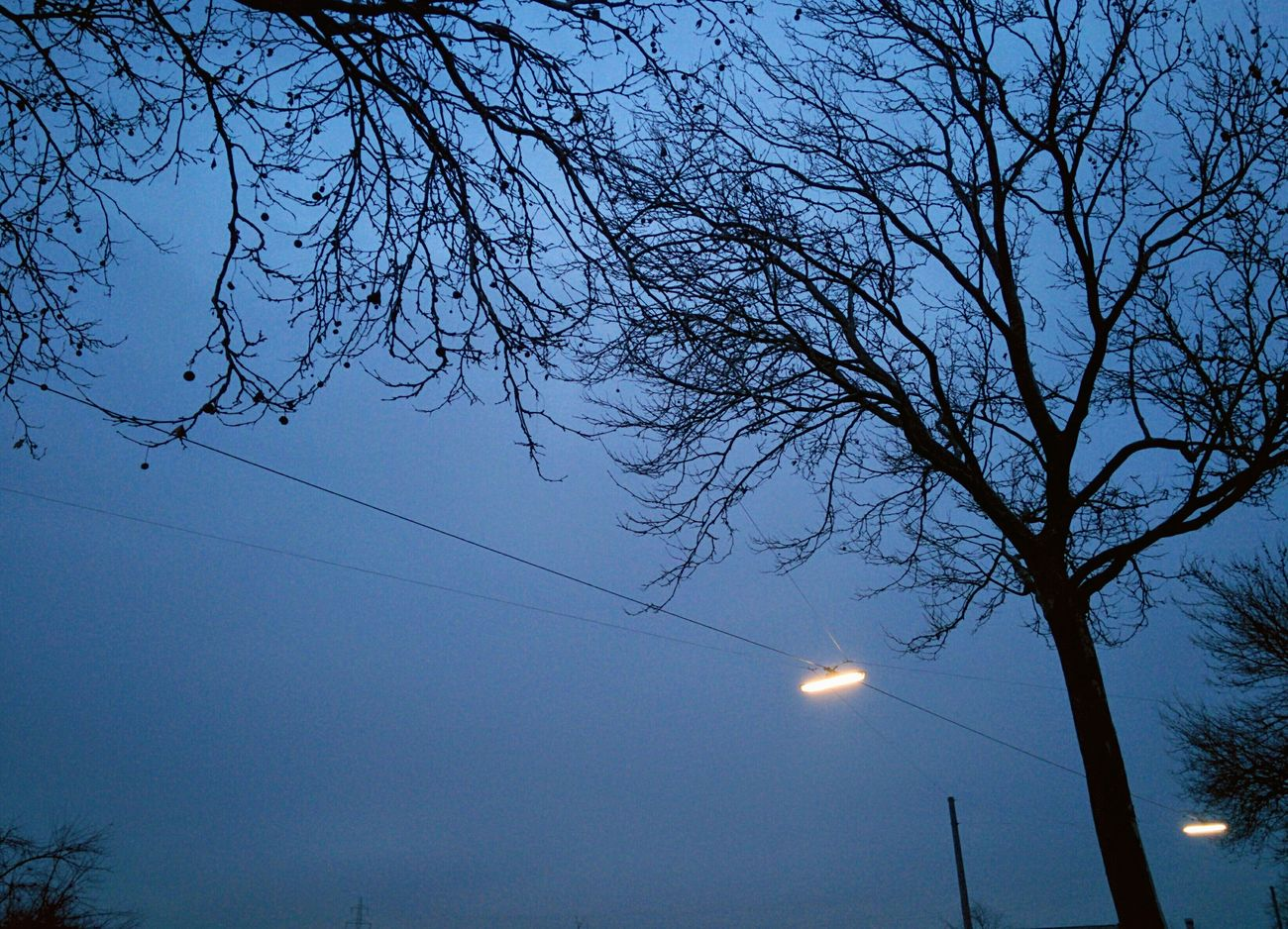 Blue Hour Low Angle View Tree Trees Silhouette And Sky Silhouettes Of Trees Wintertime Afternoon Blues Coldweather I Love My City Silent Moment Stillness In Time Artificial Light Darknessfalls Melancholic Landscapes Melancholy Tranquility Dusk Evening Look Up And Thrive Branches And Sky Blue Sky Blue Wave Blueish Vienna